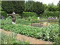 SE6779 : Well-tended vegetable garden by Pauline E