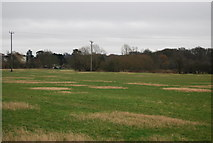 TL4311 : Grassland by the Stort Navigation by N Chadwick