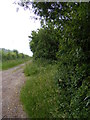 TM4682 : Green Lane footpath to Southwell Lane by Adrian Cable