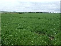 TF2684 : Crop field near North Farm by JThomas