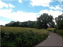 SK1742 : Edlaston Lane by Jonathan Clitheroe