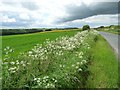 SE8457 : Wildflowers on the southern roadside verge by Christine Johnstone