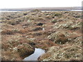 NB3533 : Moorland at Loch Bhatandìp by M J Richardson