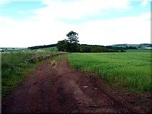 NT9058 : Field Track - Between Blackburn and Edington Hill by cathietinn