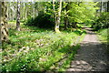 SU7489 : Footpath through Stonor Park by Graham Horn