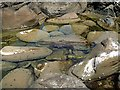 NT7871 : A rock pool near Cove Harbour by Walter Baxter