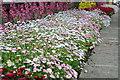 SE1565 : Flowerbed in Pateley Bridge by Philip Halling