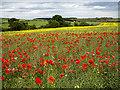 NO4321 : Farmland near Balmullo by William Starkey