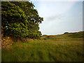 SD5594 : Boggy ground by Dockergarths Plantation, Hay Fell by Karl and Ali