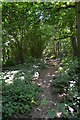 TQ6936 : Footpath through Rookery Wood by Julian P Guffogg