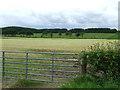 NS0463 : Fields near Ballycaul by Thomas Nugent