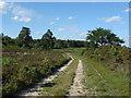 SU9254 : Heathland track by Alan Hunt