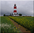 TG3830 : Happisburgh Lighthouse by Ian Taylor