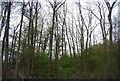 TQ6869 : Woodland near Peggy Taylor's Hill by N Chadwick