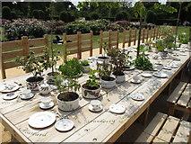 TQ1876 : IncrEdibles at Kew - tea party of edible plants by David Hawgood