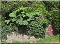 SX6058 : Postbox, Moor Cross by Derek Harper