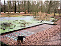 SP9713 : Clickmere Pond, Ashridge. Frozen Pond with Frabci (early February, 2010) by Chris Reynolds