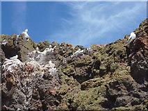 NT6779 : Coastal East Lothian : Kittiwake Crag, Victoria Harbour, Dunbar by Richard West