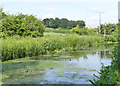 SE3901 : Dearne and Dove Canal below Tingle Bridge by Alan Murray-Rust