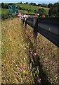 SX8866 : Orchids by Hamelin Way by Derek Harper