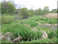 O1337 : Finglaswood Stream comes to Tolka via wetland by jwd