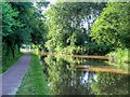 SJ9033 : Trent and Mersey Canal by David Dixon