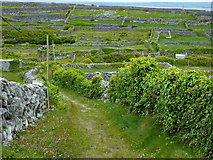 L9802 : Eastern fields - Inis Oírr by louise price