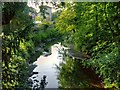 SJ8641 : River Trent, Trentham Gardens by David Dixon