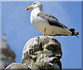 J3374 : Gull and statue, Belfast by Albert Bridge