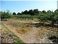 TQ8927 : Footpath crossing an apple orchard by Christine Johnstone