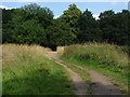 SU9948 : Pilgrims Way, Shalford Park by Alan Hunt