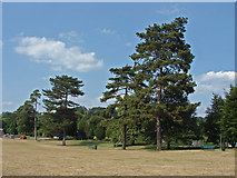 SU9948 : Trees, Shalford Park by Alan Hunt
