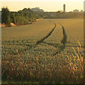 TL4854 : Wheatfield and setting sun by John Sutton