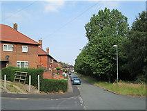 SJ9146 : Chelmsford Drive, Bentilee by David Weston