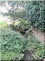SE0838 : Beck - Wilsden Old Road by Betty Longbottom