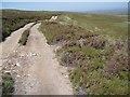 NH8735 : Estate track west of Allt Carn an t-Sean-liathanaich by Dorothy Carse