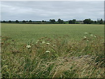 TF0258 : Farmland east of the A15 by JThomas
