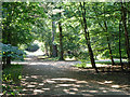 TQ0184 : Woodland track in Black Park Country Park by Robin Webster