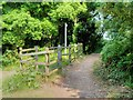 SZ5476 : Isle of Wight Coastal Path, Ventnor Botanic Gardens by David Dixon