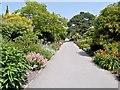 SZ5476 : Ventnor Botanic Garden by David Dixon