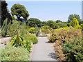 SZ5476 : Mediterranean Garden, Ventnor Botanic Garden by David Dixon
