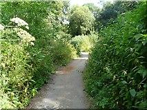 SJ9090 : Riverside footpath by Gerald England
