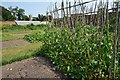 TL8160 : Ickworth House - Walled garden by Ashley Dace