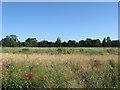 TQ1105 : Broomland Four Acres by Simon Carey
