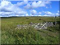 NY7989 : Above Tarsetdale by Oliver Dixon