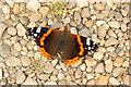 SK8770 : Red Admiral by Richard Croft