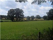 SJ5022 : Farmland at Yorton Heath by Ceri Thomas