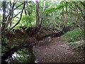 TQ6128 : Tide Brook by Robin Webster