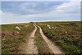 NO5886 : Track near Corlach Hill by William Starkey