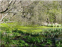 NS2209 : Swinston Ponds,Culzean estate by Humphrey Bolton